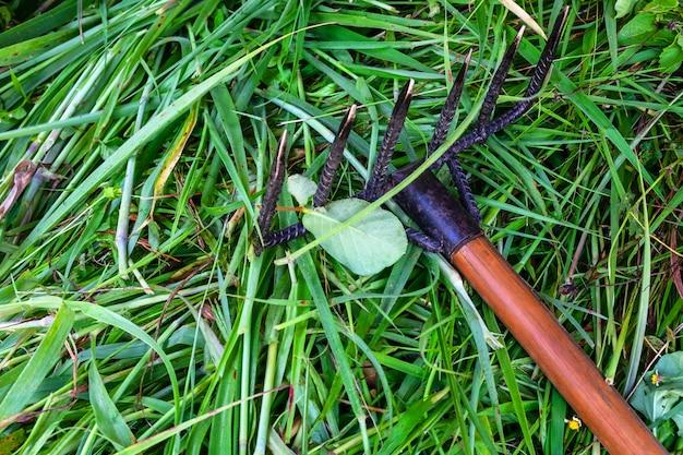 Limpando a grama com um ancinho.