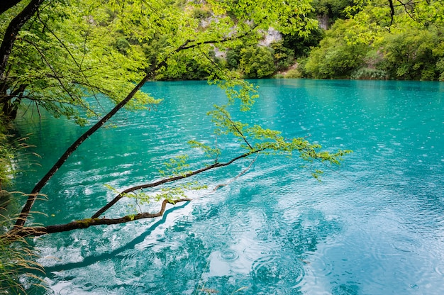 Limpar a água dos lagos de plitvice, croácia