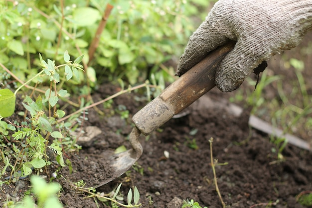 Limpe a grama no quintal