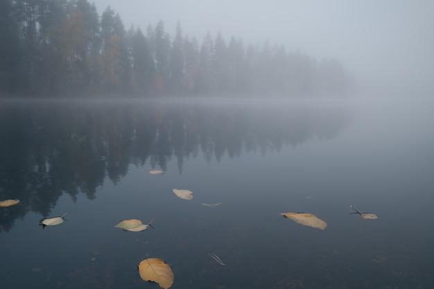 Limpe o pitoresco lago da floresta na nebulosa manhã de outono