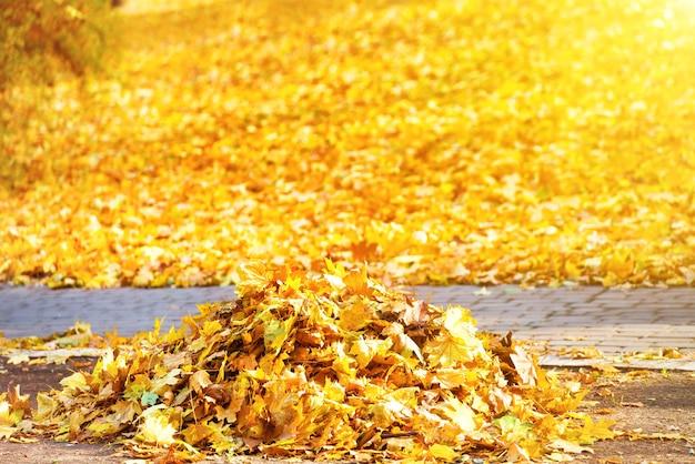 Limpeza no parque - pilha de folhas amarelas de outono no chão com luz solar