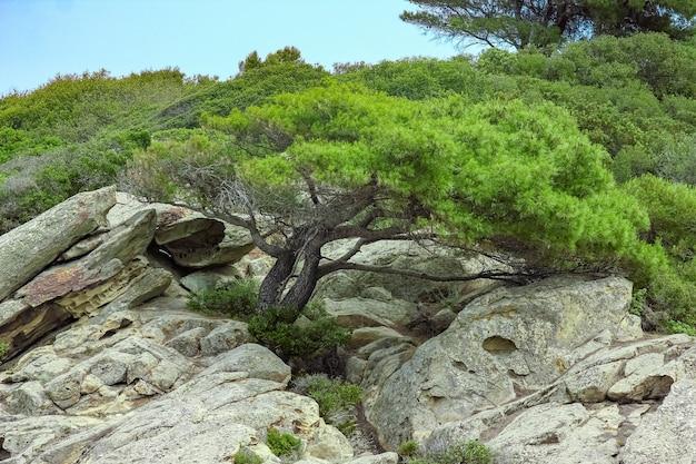 Linda árvore à beira-mar no fundo da natureza