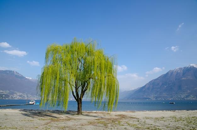 Linda árvore de salgueiro verde com vista para um lago cercado por montanhas
