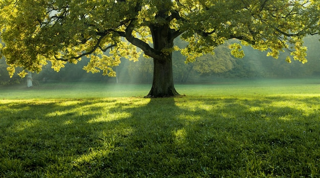 Linda árvore no meio de um campo coberto de grama com a linha das árvores ao fundo