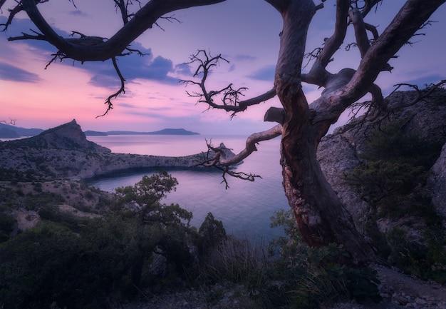 Linda árvore velha nas montanhas da crimeia ao nascer do sol
