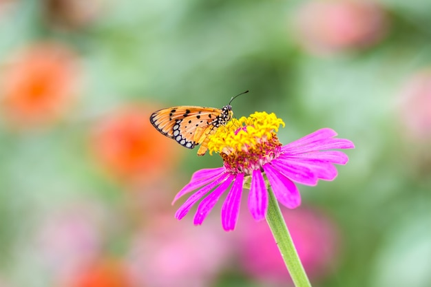 Linda borboleta com flor e fundo desfocado