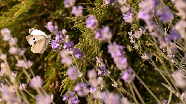 Linda borboleta em flor na natureza