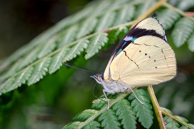 Linda borboleta empoleirada na samambaia tomando banho de sol
