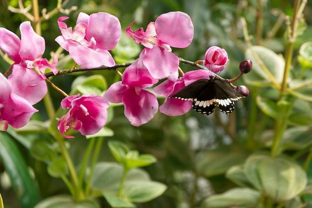 Linda borboleta, inseto no fundo verde da natureza, fotografado em schmetterlinghaus,
