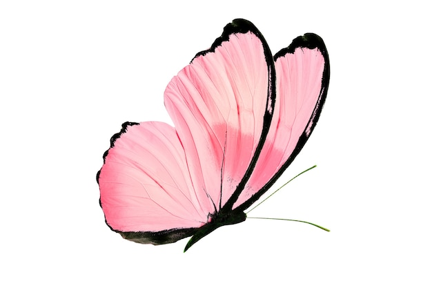 Linda borboleta isolada no fundo branco