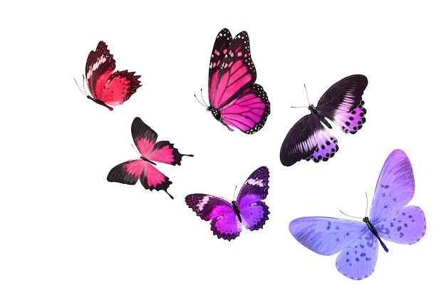 Linda borboleta monarca isolada no branco