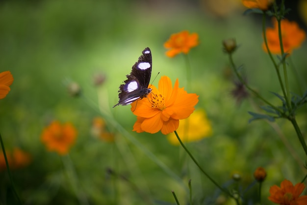 Linda borboleta na flor da planta