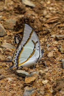 Linda borboleta na floresta