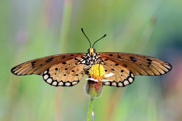Linda borboleta nas folhas verdes, vista lateral da borboleta nas folhas verdes