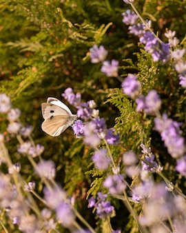 Linda borboleta no conceito de natureza