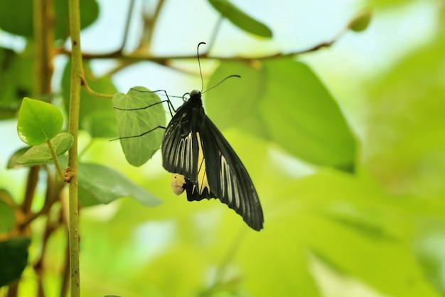 Linda borboleta no jardim zoológico