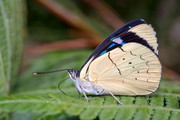 Linda borboleta pousada na samambaia calmamente