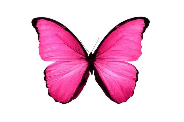 Linda borboleta rosa isolada no fundo branco