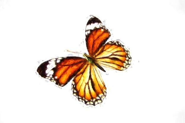 Linda borboleta voadora laranja isolada no fundo branco