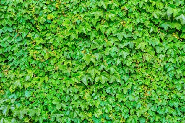 Linda caminhada color cidade jardinagem pública
