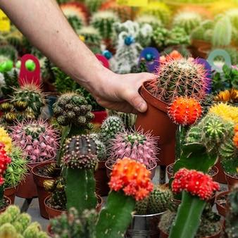 Linda cliente do sexo masculino escolhe cactos na loja de varejo. jardinagem na estufa. jardim botânico, cultivo de flores, conceito de indústria hortícola