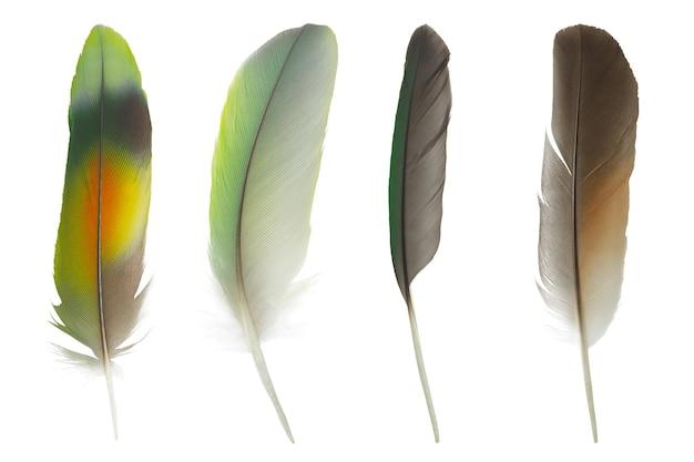 Linda coleção de penas coloridas