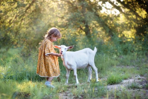 Linda criança com vestido amarelo de algodão amarelo alimentando cabra branca no campo
