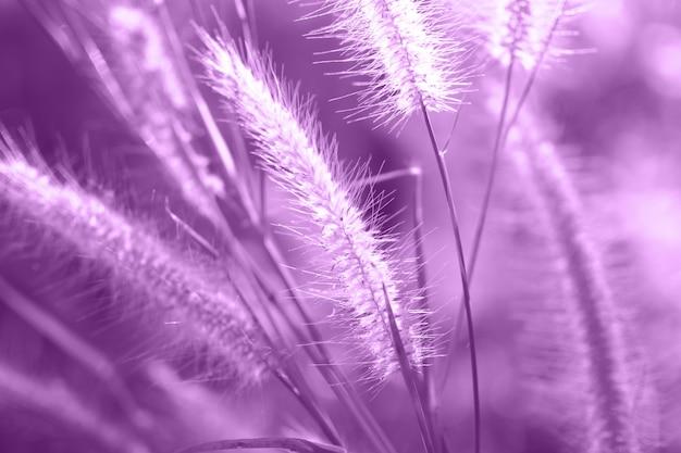 Linda de flor de grama com pôr do sol para o fundo da natureza, foco suave e turva
