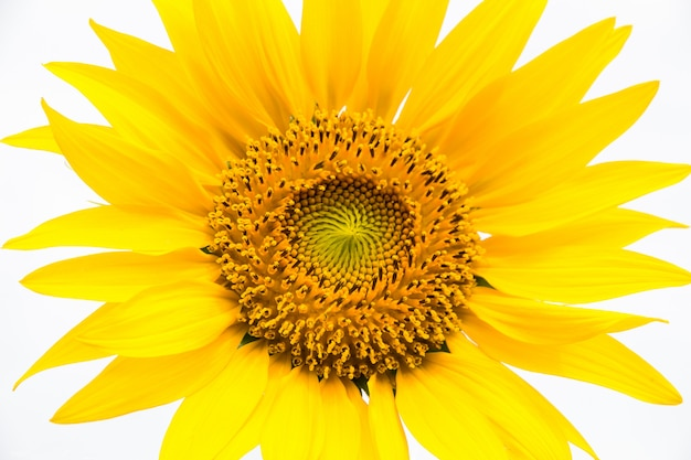 Linda de girassol campo florescendo, flores beleza