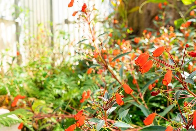 Linda decoração de flores no jardim da casa