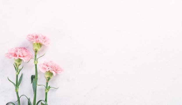 Linda e elegante flor de cravo rosa sobre mesa de mármore branco brilhante