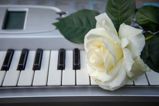 Linda e grande flor rosa branca repousa nas teclas pretas e brancas do piano, sintetizador