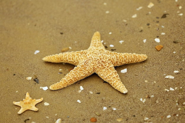 Linda estrela do mar na praia