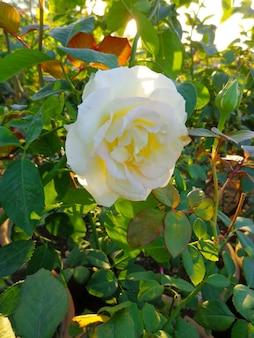 Linda flor branca no jardim