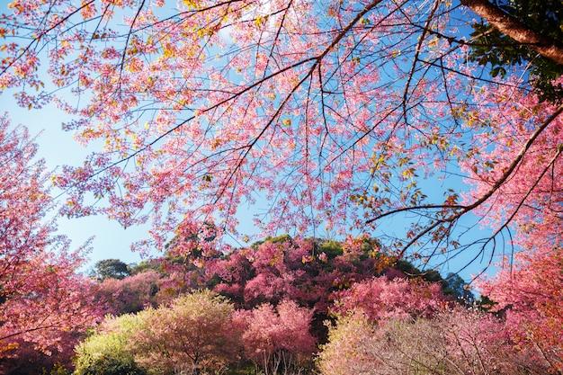 Linda flor de cerejeira rosa sobre fundo de natureza