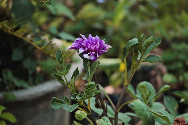 Linda flor de daphnes
