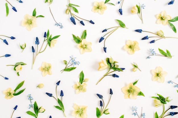 Linda flor de heléboro amarelo, flor de muscari azul e textura de folha verde no branco