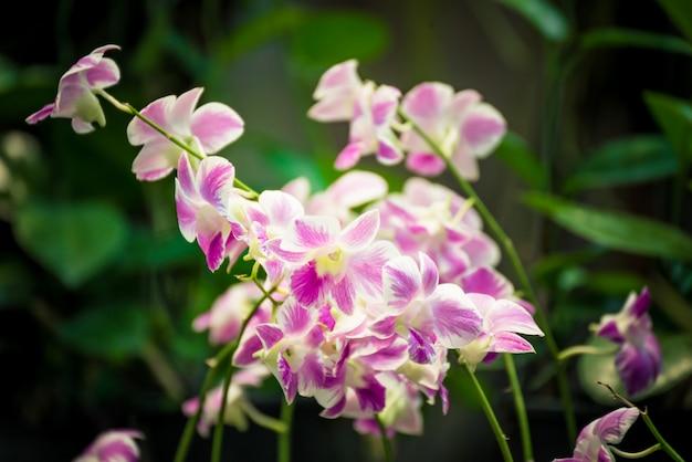 Linda flor de orquídea rosa florescendo no jardim. vista de natureza closeup de flor