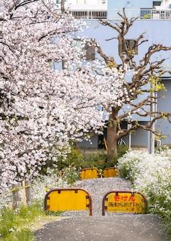 Linda flor de pessegueiro no japão