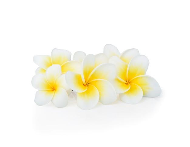 Linda flor de plumeria rubra branca isolada na superfície branca