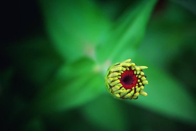 Linda flor em botão