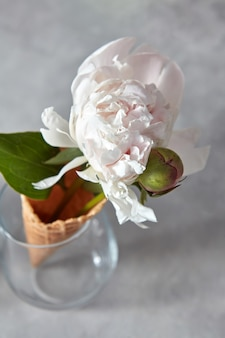 Linda flor em um chifre de wafer em um fundo cinza de concreto
