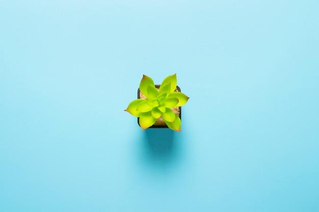 Linda flor interior verde