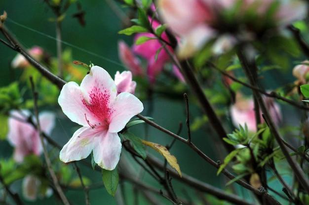 Linda flor rosa e vermelha