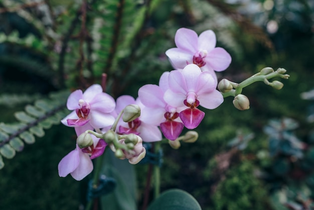 Linda flor rosa orhid desabrochando