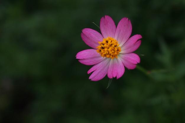 Linda flor rosa