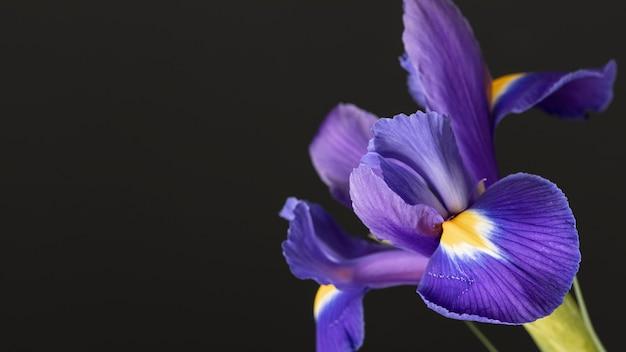 Linda flor roxa macro