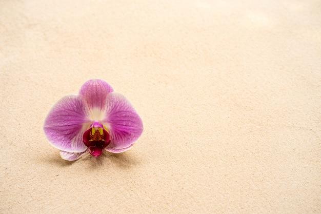 Linda flor roxa phalaenopsis orquídea em fundo arenoso.