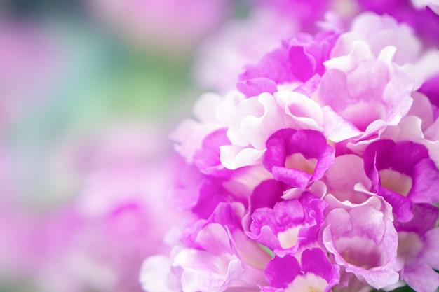 Linda flor roxa primavera closeup