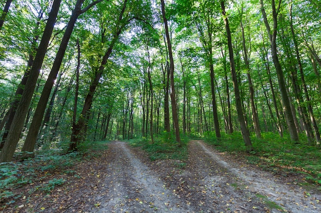 Linda floresta verde